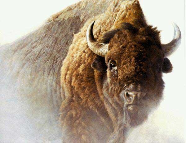 Des bisons albertains envoyés en Sibérie